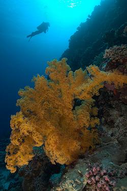 CORAL SEA WALL